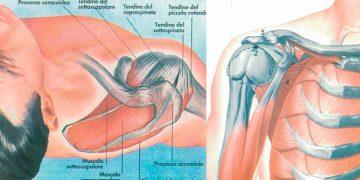 Il Dolore alla Spalla – 6 componenti dell'articolazione della spalla